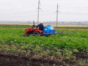 Всероссийский день картофельного поля – 2018